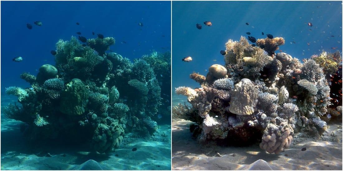 Una foto hecha a 10 m de profundidad aparece azulada, pero al ser procesada con el algoritmo se muestra en todo su explendor