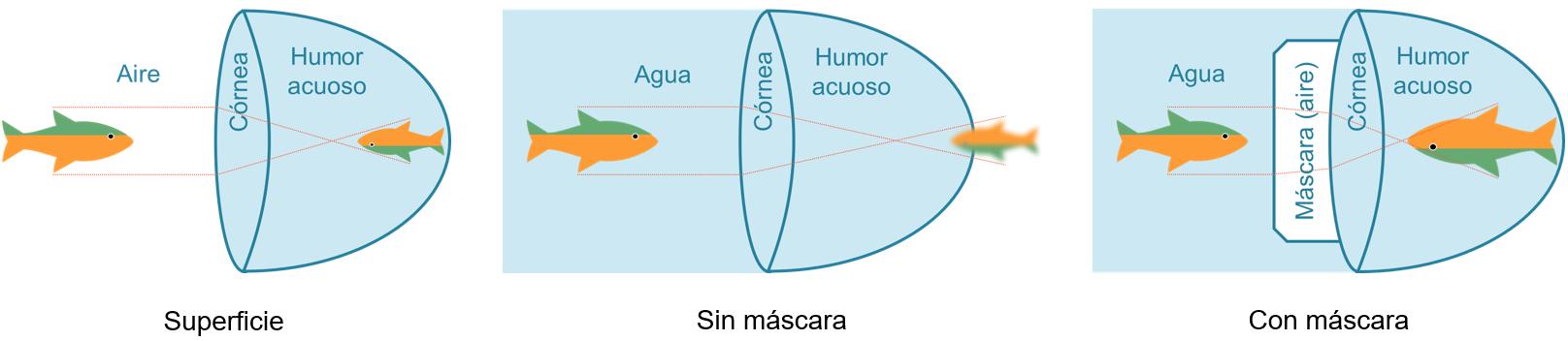 Efecto de la refracción de la luz en la visión en tres casos: en superfiice, buceando con el ojo desnudo y buceando con más cara de buceo