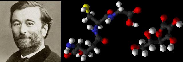 Paul Bert. Modelos de moléculas antioxidantes: glutatión y ácido ascórbico (vitamina C)