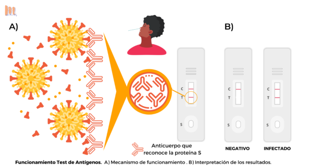 Funcionamiento Test Antigenos